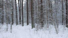 Het lopen op een Weg binnen Forest Covered in Zware Sneeuw Het Weergeven van POV Steadicam stock footage