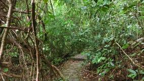 Het lopen op een Weg in het Tropische het perspectiefstandpunt van Wildernisforest personal HD slowmotion thailand stock footage