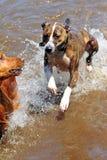 Het lopen op water Stock Foto