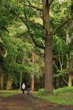 Het lopen in oud park stock afbeelding