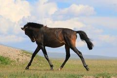 Het lopen paard Royalty-vrije Stock Afbeelding