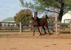 Het lopen paard Royalty-vrije Stock Fotografie