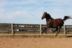 Het lopen paard Royalty-vrije Stock Foto's