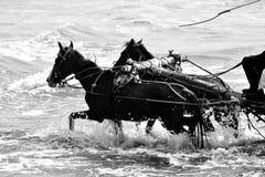 Het lopen Paarden in Overzees strand Royalty-vrije Stock Afbeeldingen