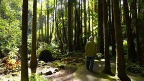 Het lopen in palmbos stock afbeelding