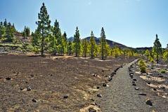 Het lopen pas via Onderstel Teide in westelijke flank Stock Afbeeldingen