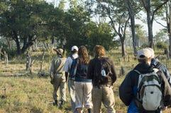 Het lopen safari Stock Afbeeldingen