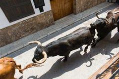 Het lopen stieren Royalty-vrije Stock Afbeelding