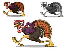 Het lopen Turkije vogel Stock Foto