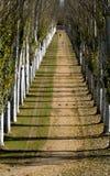 Het lopen tussen bomen Stock Foto's