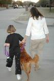 Het lopen van de Hond royalty-vrije stock foto's