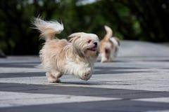 Het lopen van de hond Stock Afbeelding