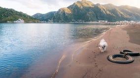 Het lopen van de hond Royalty-vrije Stock Afbeelding