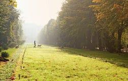 Het lopen van de hond in de herfstpark Stock Afbeeldingen