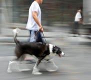 Het lopen van de hond op de straat Stock Afbeeldingen