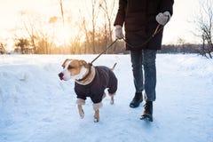 Het lopen van de hond op koude de winterdag stock foto's