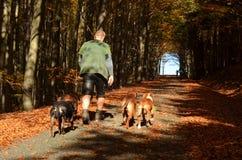 Het lopen van de honden, bosweg in Tsjechische Republiek Royalty-vrije Stock Foto