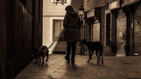 Het lopen van de honden in de straten van oud Madrid Royalty-vrije Stock Afbeelding