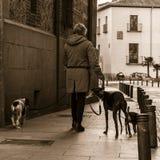 Het lopen van de honden in de straten van oud Madrid Royalty-vrije Stock Afbeeldingen