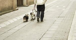 Het lopen van de mens honden Stock Foto