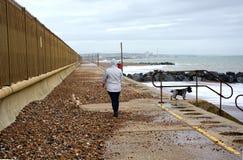 Het lopen van de vrouw honden De schade van het zeedijkonweer stock fotografie