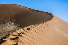 Het lopen van een duin in Sossusvlei, Namibië Stock Foto's