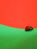 Het Lopen van het lieveheersbeestje Stock Afbeeldingen