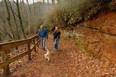 Het lopen van hond in de herfst Stock Fotografie