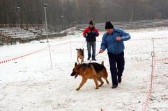 Het lopen van honden Royalty-vrije Stock Afbeelding