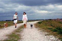 Het lopen van honden bij de landweg Royalty-vrije Stock Foto's