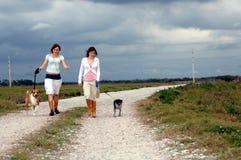 Het lopen van honden bij de landweg Royalty-vrije Stock Foto