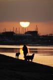 Het lopen van honden op een strand Stock Afbeelding