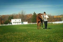 Het lopen van paard in weide Stock Foto's