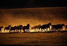 Het Lopen van paarden Royalty-vrije Stock Afbeelding
