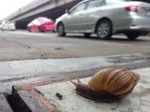 Het lopen van slak op voetgang met verkeersachtergrond Royalty-vrije Stock Fotografie