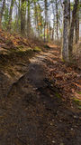 Het lopen van sleep door het bos Royalty-vrije Stock Fotografie