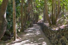 Het lopen van sleep in regenwoud voor families royalty-vrije stock foto