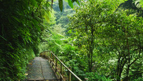 Het lopen van sleep in tropisch bos Stock Foto