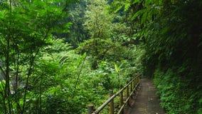 Het lopen van sleep in tropisch bos Royalty-vrije Stock Foto's