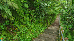Het lopen van sleep in tropisch bos Stock Foto's