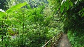 Het lopen van sleep in tropisch bos Royalty-vrije Stock Fotografie