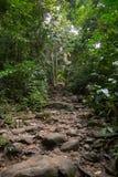 Het lopen van slepen met kleine en grote rotsen in het groene bos stock foto's