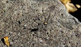 Het lopen van spin in zonneschijn stock foto