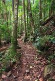 Het lopen van spoor door regenwoud stock foto