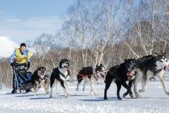 Het lopen van het teamkamchatka van de sleehond musher Vitaly Tishkin kamchatka Stock Foto's