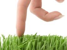 Het lopen van vingers op gras Stock Foto's