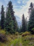 Het lopen van weg aan de bergkloof stock foto