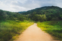 Het lopen van weg in het berg groene bos Royalty-vrije Stock Fotografie