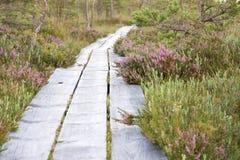 Het lopen van weg in bos Royalty-vrije Stock Fotografie