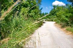 Het lopen van weg in de lente Stock Fotografie
